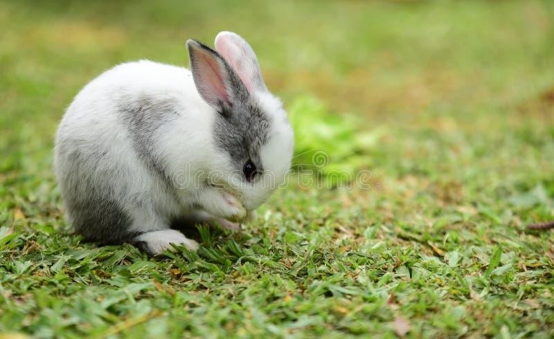 Små kaniner är knepiga i trädgården royaltyfria bilder