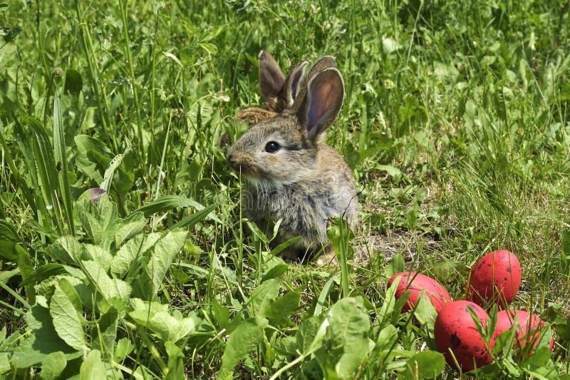 Små kaniner på en beta och röda ägg arkivfoton