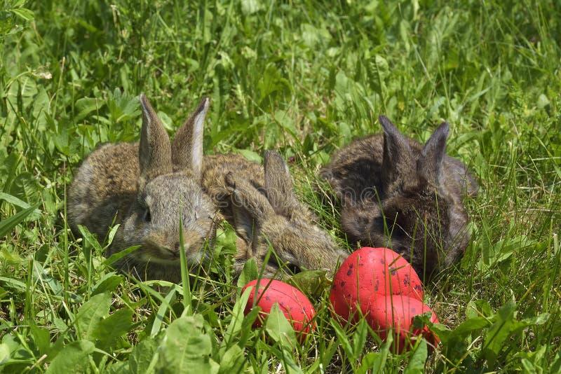 Små kaniner på en beta och röda ägg royaltyfri bild