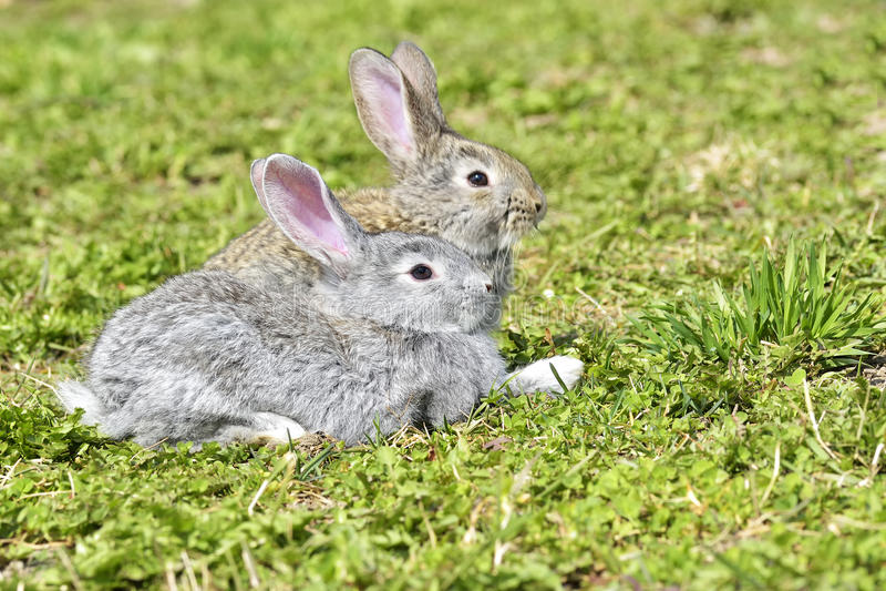 Små kaniner som utomhus sitter arkivfoto