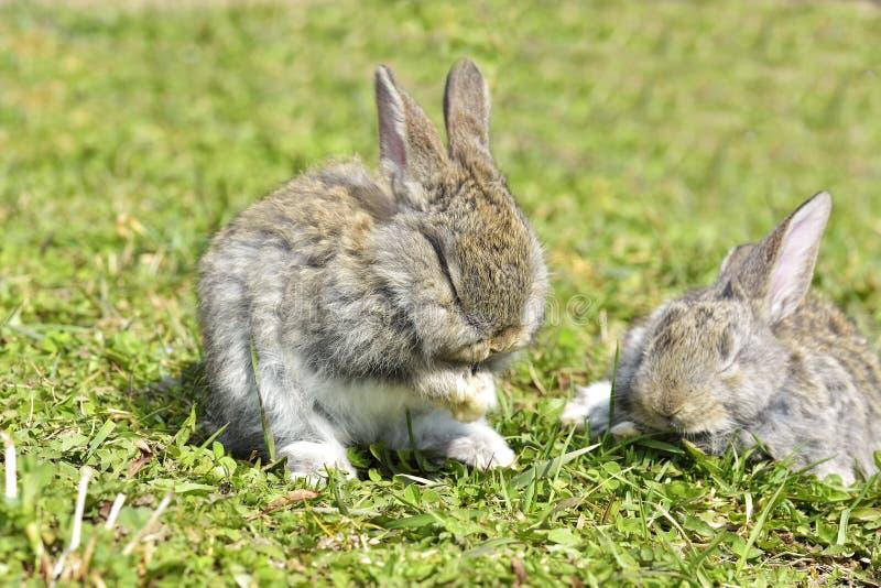 Små kaniner som utomhus sitter royaltyfria foton