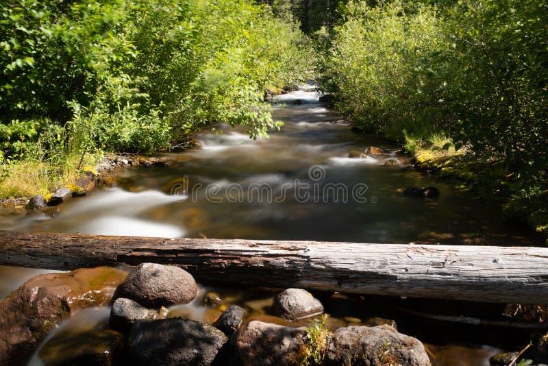 Små kaskader för en flod till och med skogen i nationell monument för Mt St Helens nära juni sjön arkivfoto