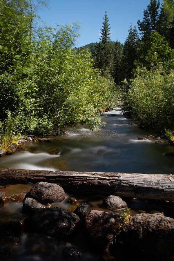 Små kaskader för en flod till och med skogen i nationell monument för Mt St Helens nära juni sjön, ståendeaspekt royaltyfri foto