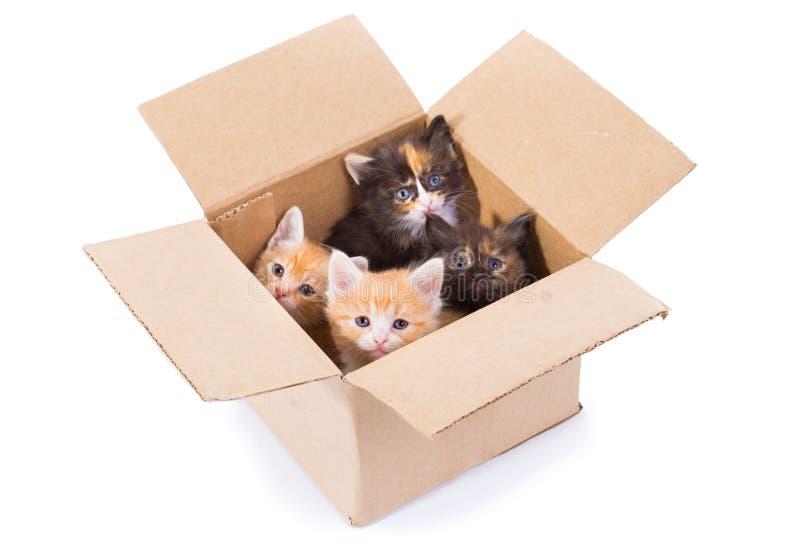 Små kattungar i en ask royaltyfria bilder
