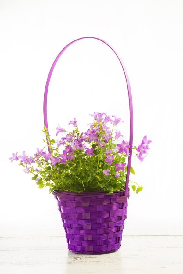 Små magentafärgade blommor royaltyfri fotografi