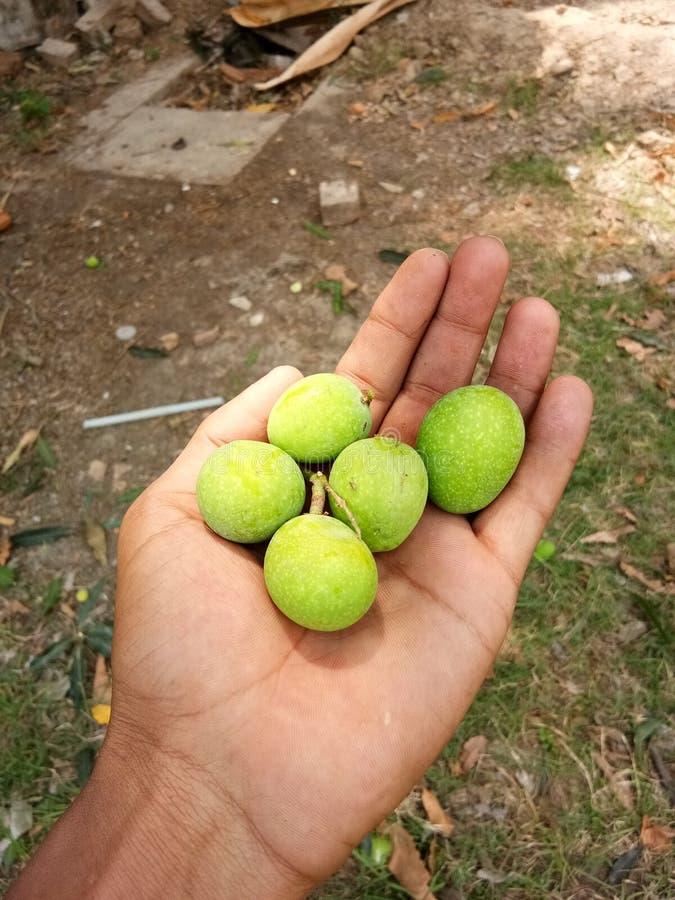 Små mango royaltyfria foton