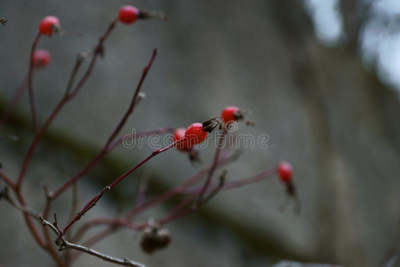 Små objekt för naturlig bakgrund arkivfoto