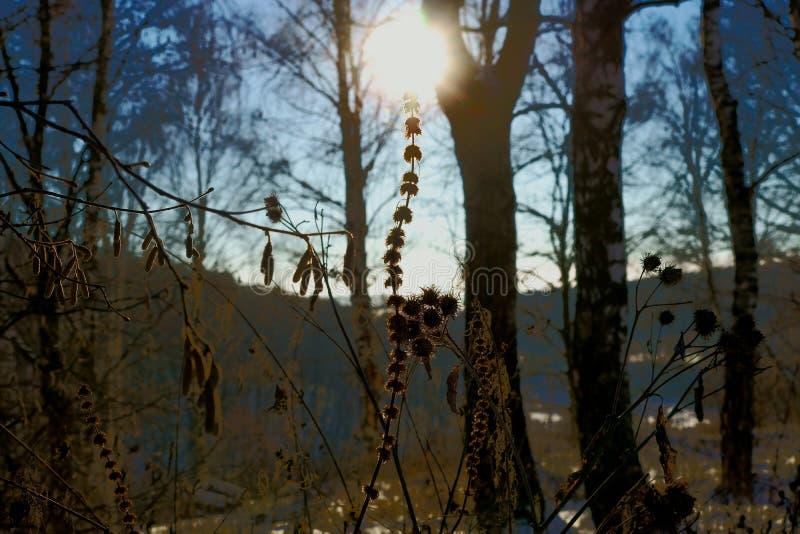 Små objekt för naturlig bakgrund royaltyfria foton