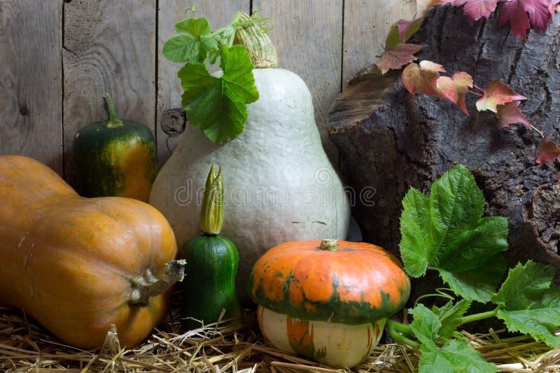 Små och stora pumpor med gröna sidor på ett hö i Autumn Still Life, träplankabakgrund royaltyfri foto