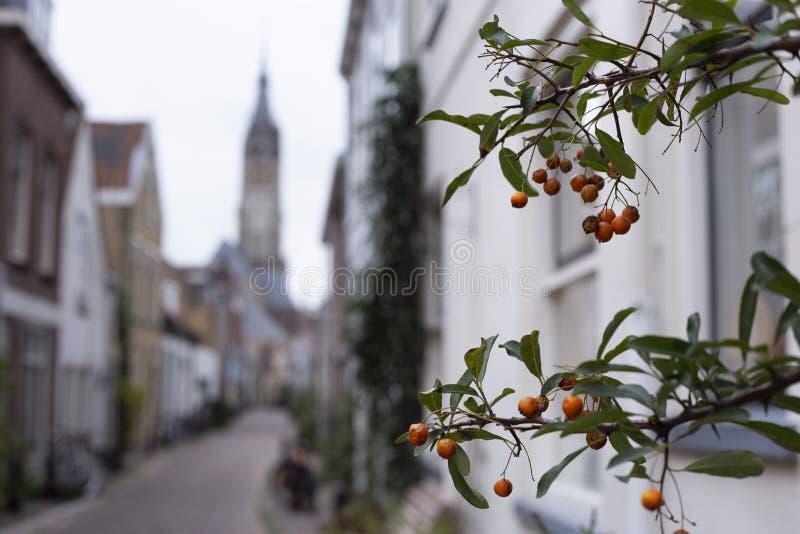Små orange bär som växer i Trompetstraaten med en sikt av Nieuwen Kerk, ny kyrka arkivfoton