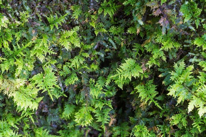 Små ormbunkar växer på ett träd royaltyfria foton