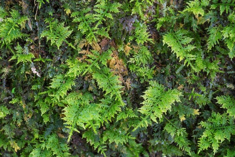 Små ormbunkar växer på ett träd arkivfoto