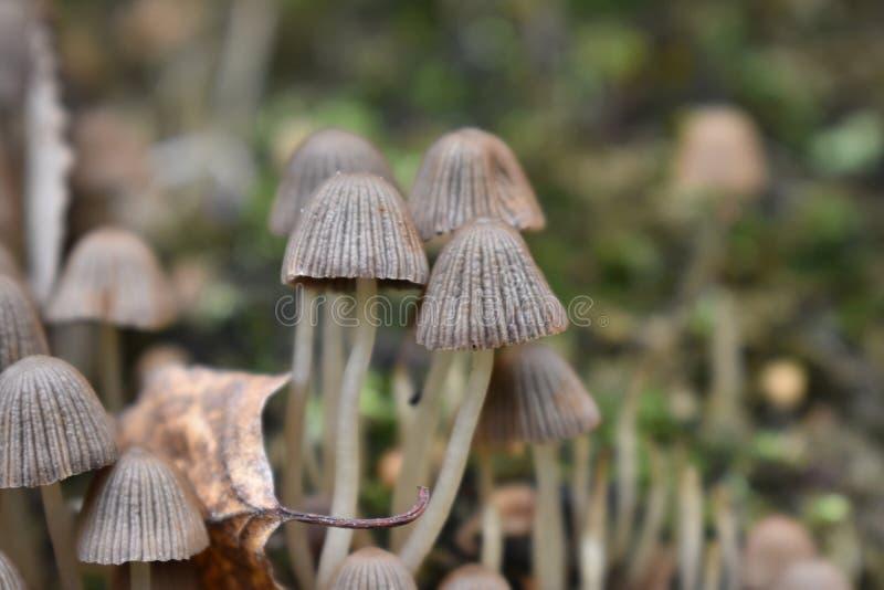 Små par av champinjoner i skogen royaltyfria foton