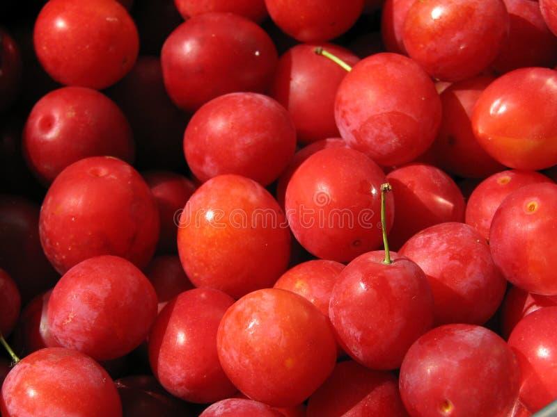 Små röda plommoner royaltyfri fotografi