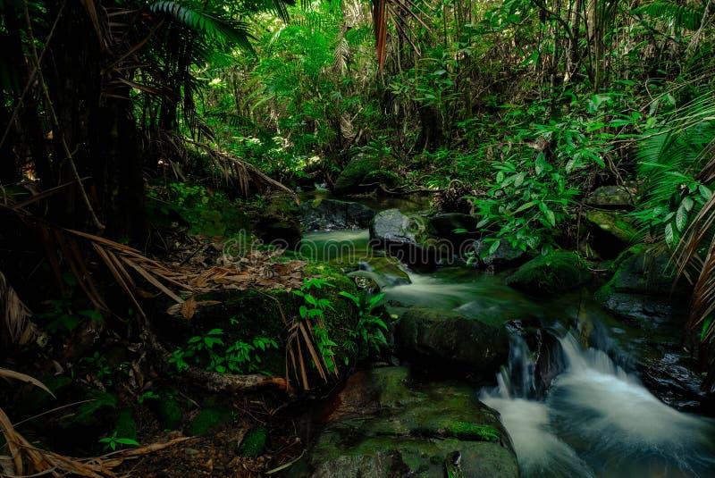 Små strömmar genom rikligt med tropiska skogar i thailändska skogar,Phang Nga,Koh Yao Yai royaltyfria bilder