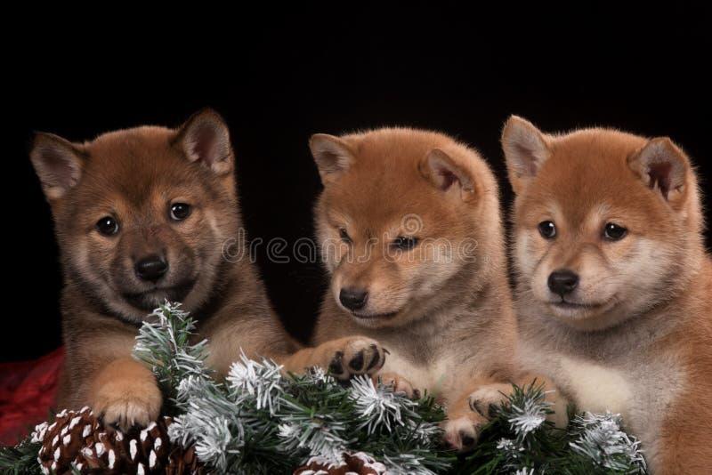 Små tre och gullig valp i julstudio royaltyfria foton