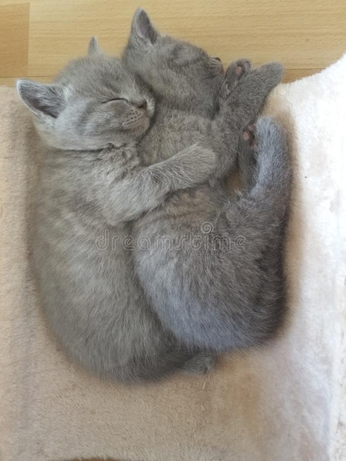 Små två behandla som ett barn katter arkivbild