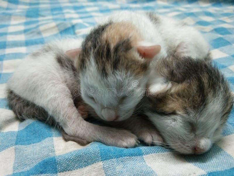 Små två behandla som ett barn kattungebilden fotografering för bildbyråer