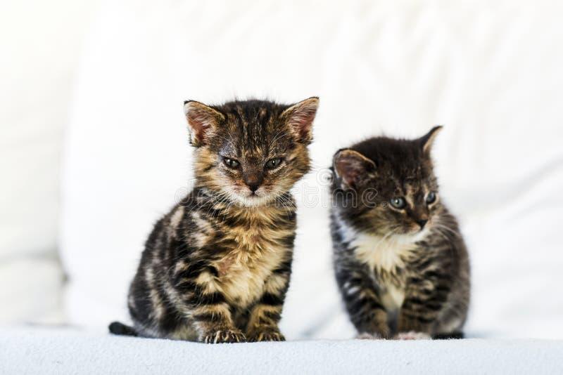 Små två och gulliga kattungar som hemma sitter på soffan royaltyfria bilder