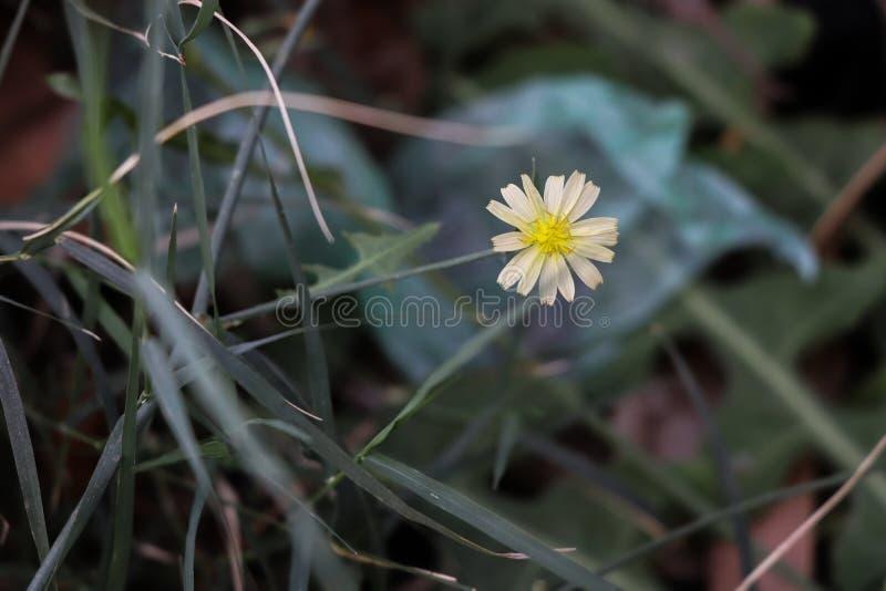 Små växt och filialer arkivfoto