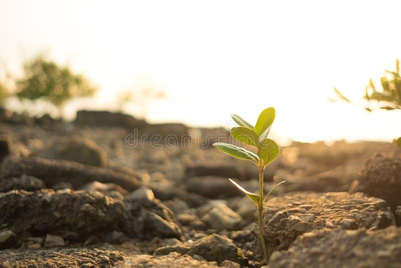 Små växter för naturbakgrundscloseup med stenen, solsken och royaltyfri foto