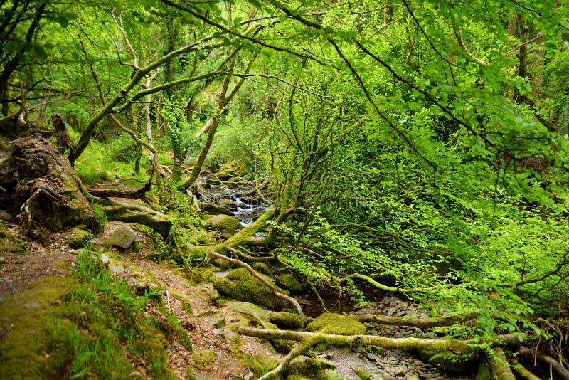 Små vattenfall nära Torc vattenfall, en av mest populära turist- dragningar i Irland som lokaliseras i skogsmark av Killarney arkivfoto