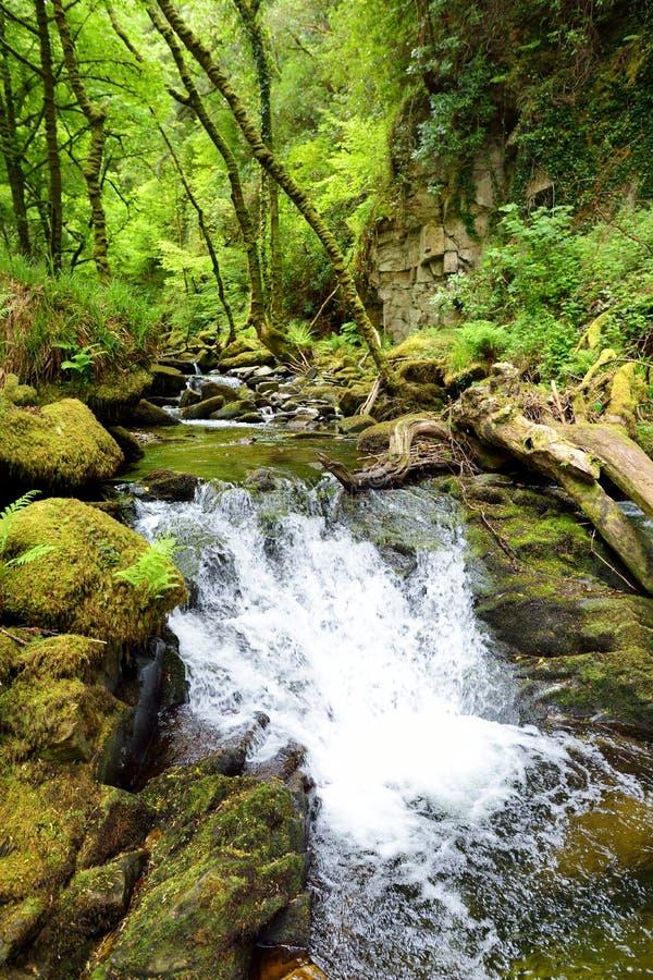 Små vattenfall nära Torc vattenfall, en av mest populära turist- dragningar i Irland som lokaliseras i skogsmark av Killarney royaltyfri bild