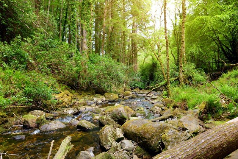 Små vattenfall nära Torc vattenfall, en av mest populära turist- dragningar i Irland som lokaliseras i skogsmark av Killarney arkivbild