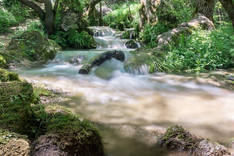 Små vattenfall till och med trät royaltyfria foton
