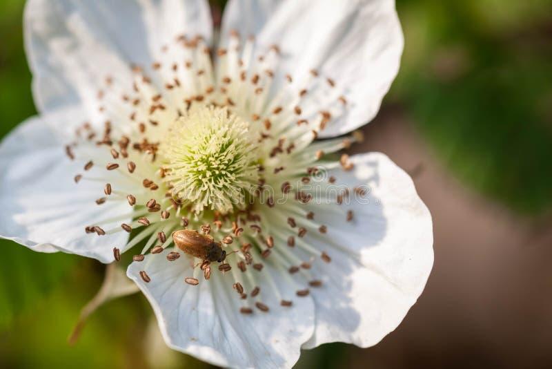 Små vita blommor arkivfoton