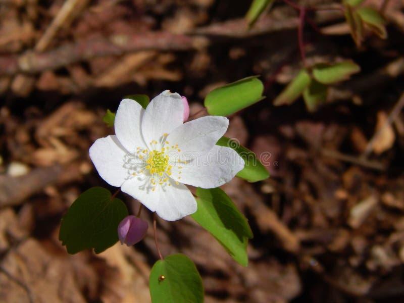 Små vita blommor i fullständig sommareftermiddag royaltyfri fotografi