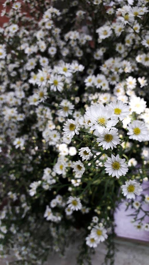 Små vita blommor med den gula gerberaen arkivfoton