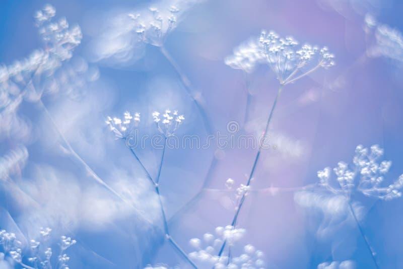 Små vita blommor på en försiktigt suddig blått-lilor bakgrund Abstrakt blom- naturlig bakgrund Selektiv och mjuk fokus konst arkivbilder