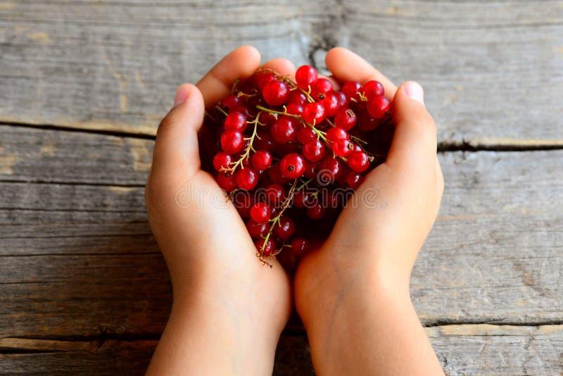Småbarnet rymmer en borste för röd vinbär i hans händer rött moget för vinbär Sommarbärbakgrund royaltyfria bilder
