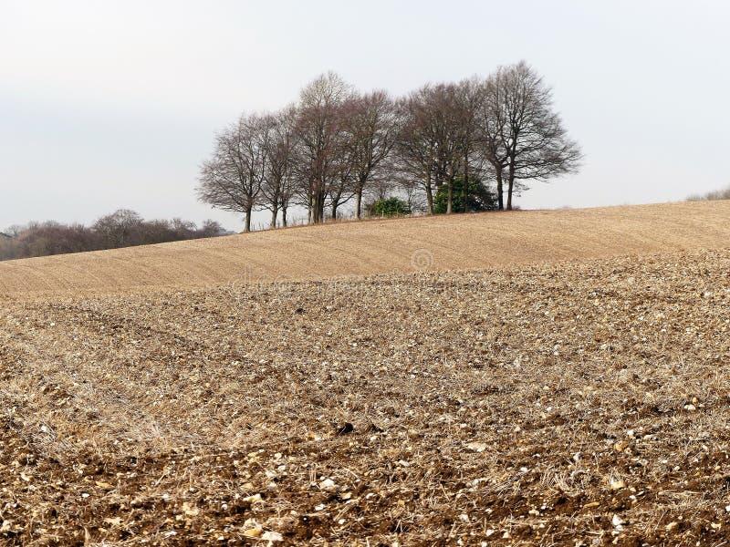 Småskog av träd i det plöjde fältet, Latimer arkivfoton