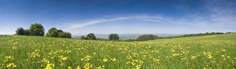 Smörblommafält, lantligt landskap royaltyfri bild