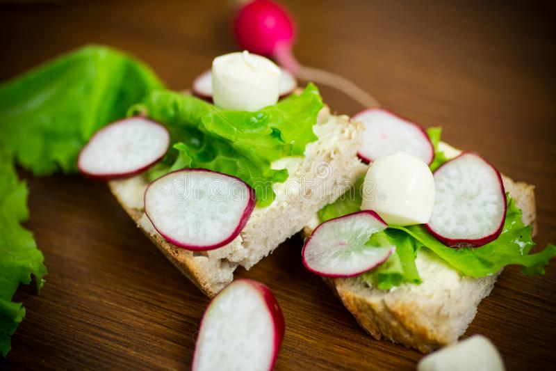 Smörgås med ost, grönsallat och den röda rädisan på ett trä royaltyfria foton