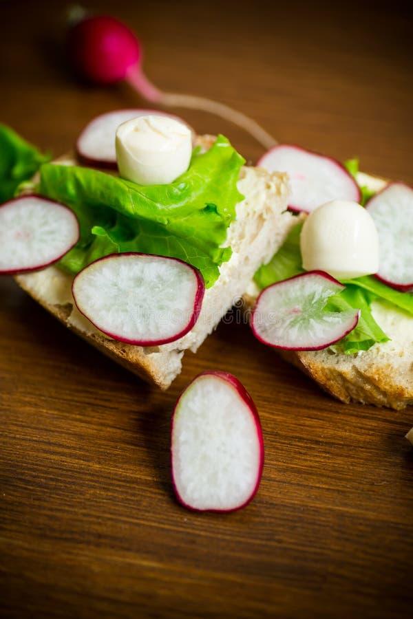 Smörgås med ost, grönsallat och den röda rädisan på ett trä arkivfoto