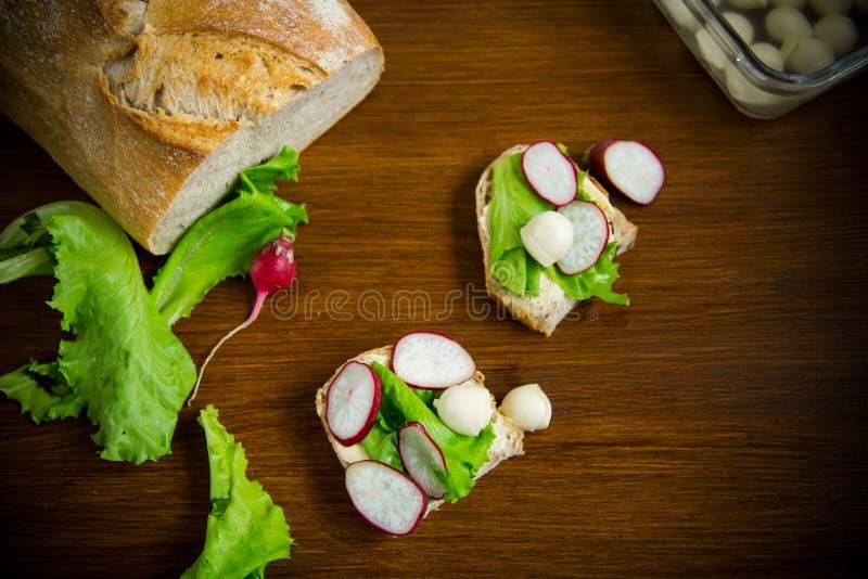 Smörgås med ost, grönsallat och den röda rädisan på ett trä royaltyfri bild