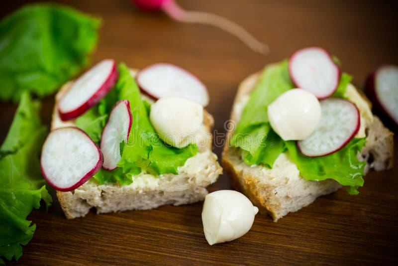 Smörgås med ost, grönsallat och den röda rädisan på ett trä fotografering för bildbyråer