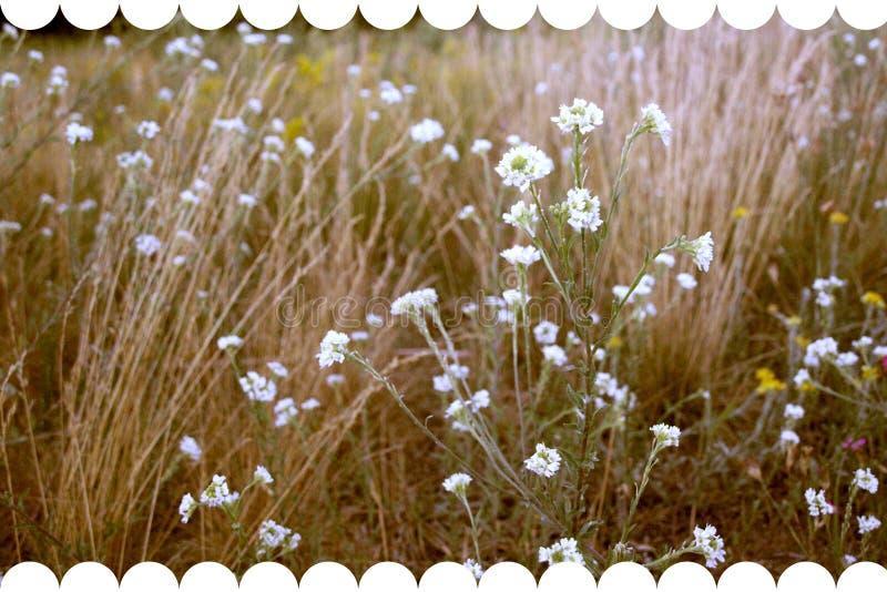 Sm? blommor f?r tappningbakgrund, h?rlig som natur tonar designv?rnaturen, solv?xter royaltyfria foton