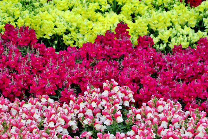 Sm? h?rliga blommor av olika f?rger t?tt upp royaltyfri foto