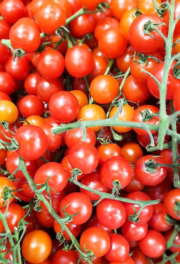 sm? tomater p? en filial arkivfoto