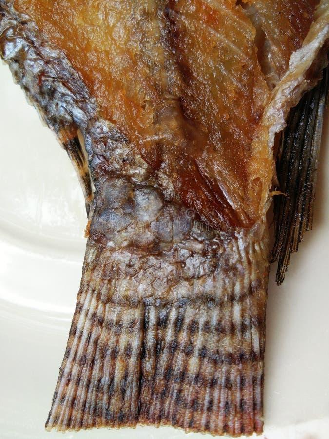 Smażący rybi ogon zdjęcia stock