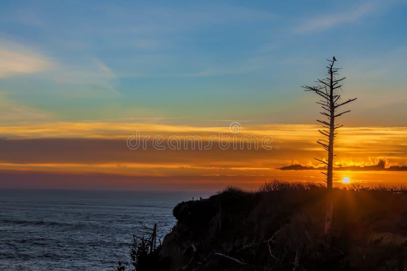 Smagliatura sola profilata tramonto fotografia stock libera da diritti