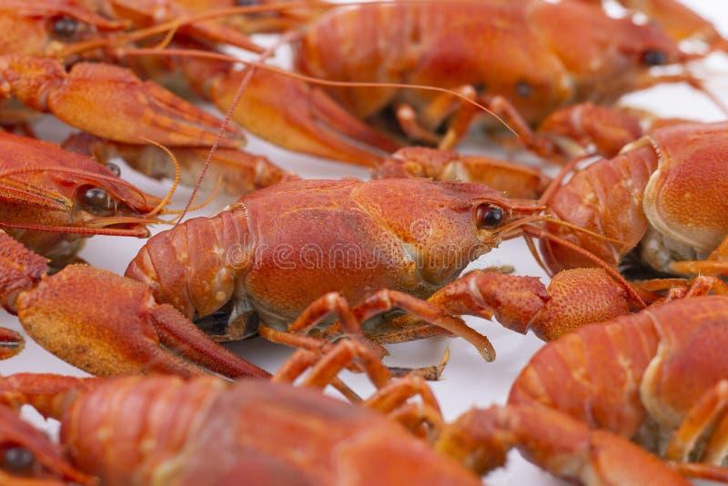 Smakelijk, gekookt crawfishes van rode kleur close-up Selectieve nadruk stock afbeeldingen