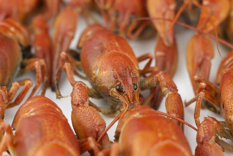 Smakelijk, gekookt crawfishes van rode kleur close-up Selectieve nadruk royalty-vrije stock foto
