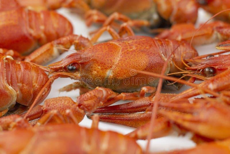 Smakelijk, gekookt crawfishes van rode kleur close-up Selectieve nadruk stock foto