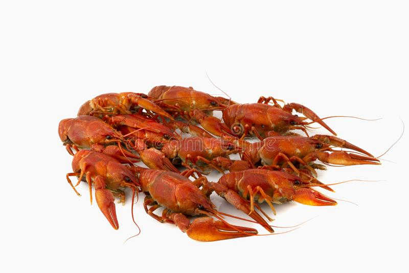 Smakelijk, gekookt crawfishes van rode kleur op een witte achtergrond royalty-vrije stock foto's