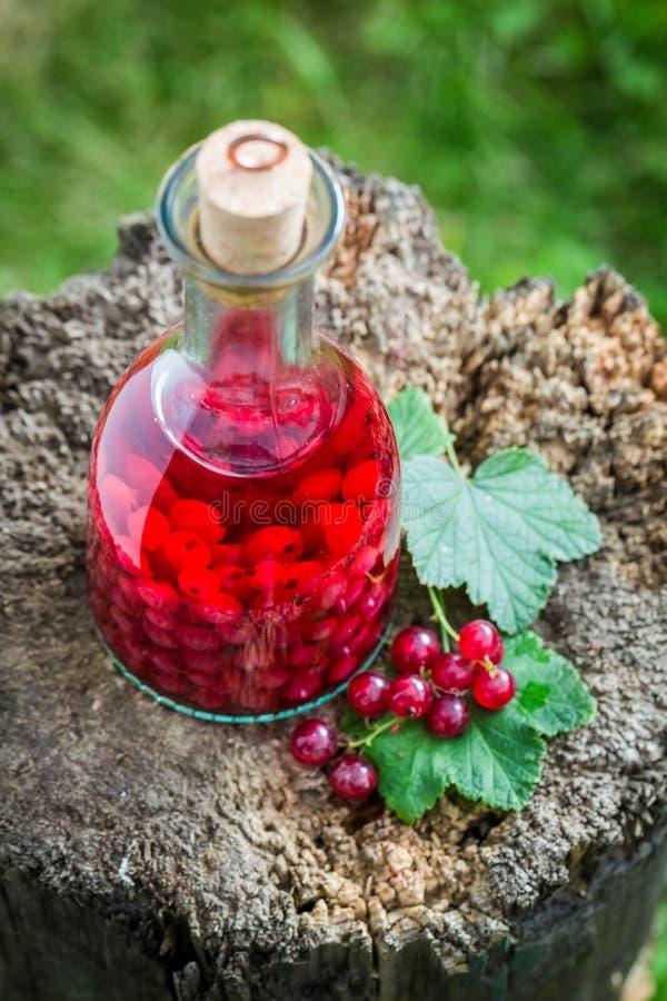 Smakelijke die likeur van redcurrants en alcohol wordt gemaakt royalty-vrije stock afbeelding